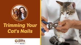 Trimming Your Cat's Nails thumbnail