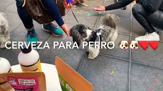 Tabata Jalil Cerveza para perros