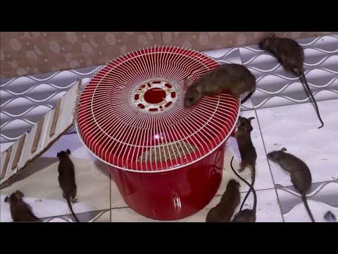 Mouse Trap LIVE | Rat Trap Live Catch A Mouse | Electric Mouse Trap