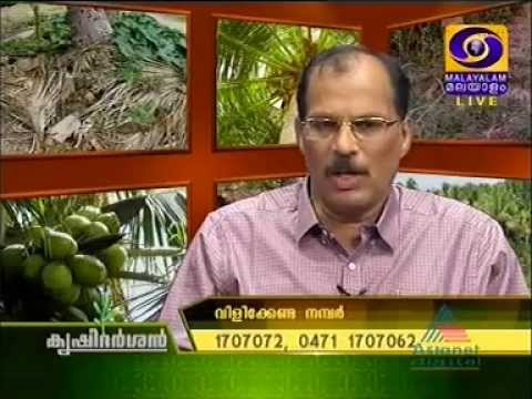 KRISHI DARSHAN: Soil fertility management in Coconut cultivation