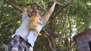 Best Kitten Dad Ever Will Climb Any Tree For His Baby