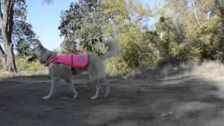 SafetyPUP High Visibility Reflective Dog Vest