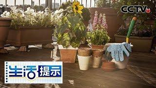 《生活提示》 20190806 阳台种植 防虫有方法  CCTV