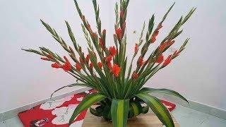 Cách cắm hoa lay ơn (hoa dơn) nghìn tay đón Tết đơn giản