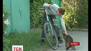200 тисяч компенсації через укус безпритульної собаки вимагає жителька Житомира від міської влади(UA - 200 тисяч компенсації через укус безпритульної собаки вимагає жителька Житомира від міської влади. На..., 2015-04-28T17:31:42.000Z)