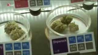 Nano: Legales Cannabis