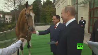 بوتين يهدي ملك البحرين جوادا أصيلا