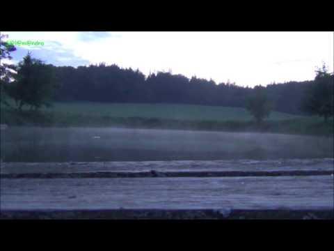 Hyla arborea -  The Concert