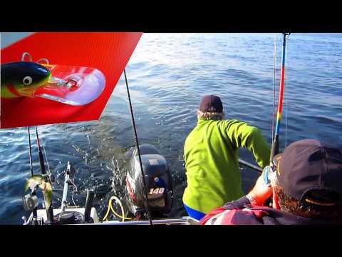 ловля лосося на онеге