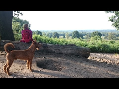 "Hiking with Irish Terrier ""Rudi"" (9 months old)"