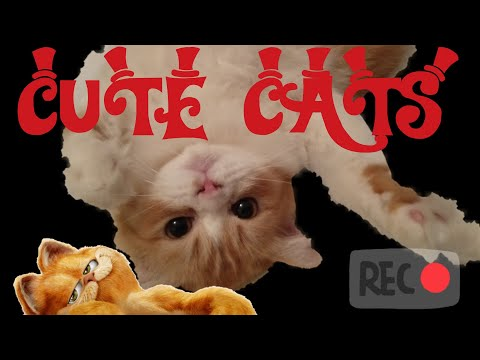 FUNNY CATS - CATS PLAY WITH PHONE. REALLY FUNNY . FUNNIEST EVER . VIRAL . TRENDING . CUTE CATS .