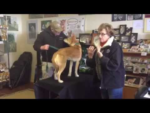 The Dingo Story - Dingo Discovery and Research Centre