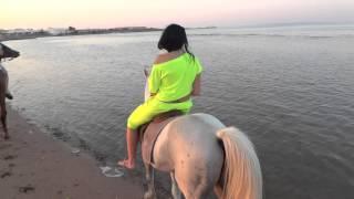 Ультракласная конная прогулка в Египте на лошадях))Hostmark 2013 август, стоимость 40$(оцените пляж, и море ..время 6 вечера))там еще был маленький верблюжонок))но его я не снимала на видео), 2014-01-03T20:19:53.000Z)