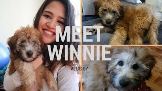 MEET MY NEW PUPPY! Winnie the Whoodle