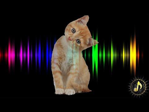Newborn Kitten Meowing Sound Effect
