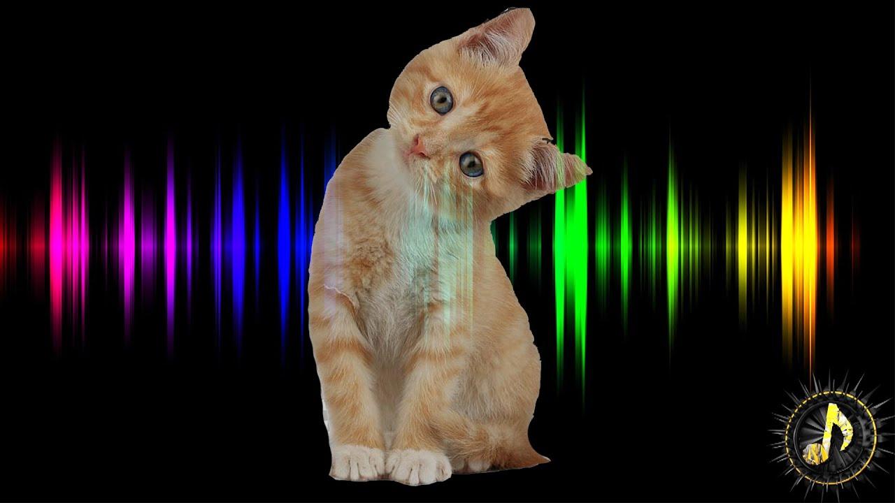 Newborn Kitten Meowing Sound Effect Sounds Cats Love Youtube
