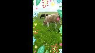 Efsane çoban 7