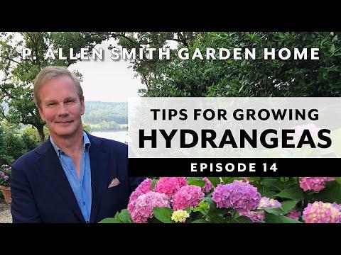 Download Hydrangeas | Growing Tips & FAQ: Garden Home VLOG (2019) 4K