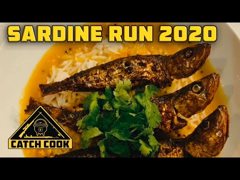 The South African sardine run, an exciting event for the whole family!