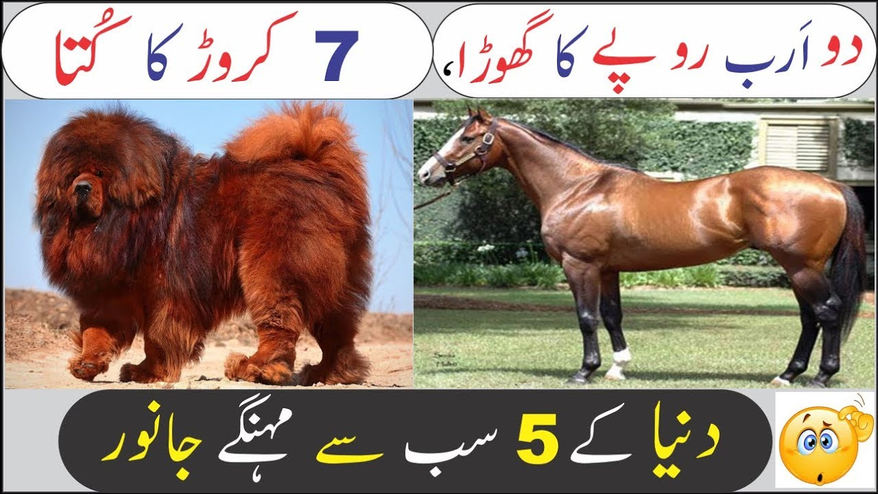 5 Most Expensive Pets  in World    (Urdu/Hindi)