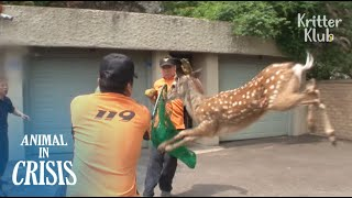 Feisty Deer Keeps Running Away Even After Being Hit By A Tranquilizer | Animal in Crisis EP92
