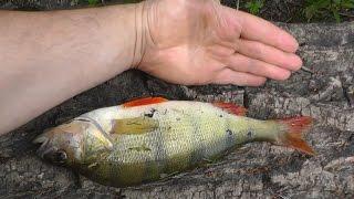 Мочим щуку на рыбалке, серия 1(Это видео о рыбалке на щуку в летнюю жару. Мои соц группы где я выкладываю фото с каждой рыбалки http://new.vk.com/sekre..., 2016-09-15T16:29:54.000Z)