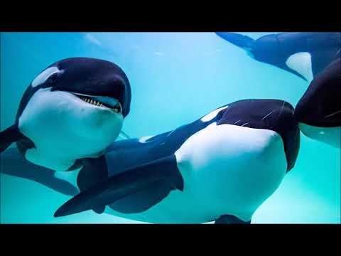El Relajante Sonido Del Canto de Ballenas Por 2 hrs