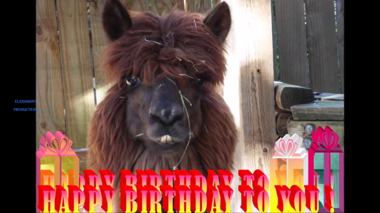 Happy Birthday To You Funny Llama And Parrot 48
