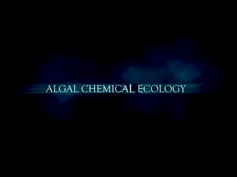 Algal Chemical Ecology - Trailer