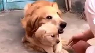 Как животные защищает своих детей