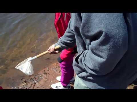 West River Eel Release
