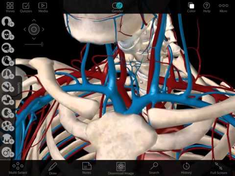 Visible Body Human Anatomy Atlas Walkthrough