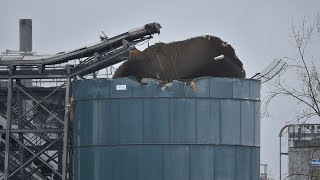 video: Avonmouth chemical tank explosion: four dead after major incident in Bristol