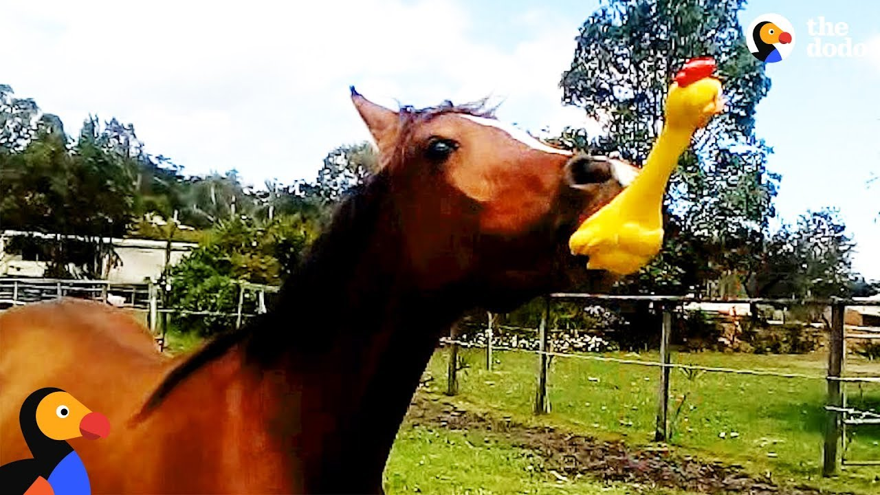 Horse Loves His Rubber Chicken Toy