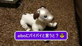 "aiboにバイバイと言うと?👋- When saying ""bye bye"" to Aibo? 【アイボ】"