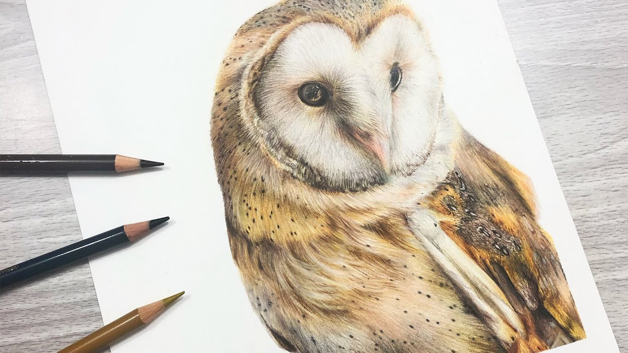 How To Draw a BARN OWL with COLORED PENCIL - YouTube