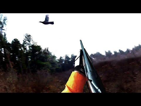 Michigan Grouse Hunting
