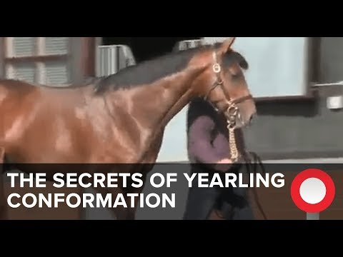 The Secrets Of Yearling Conformation