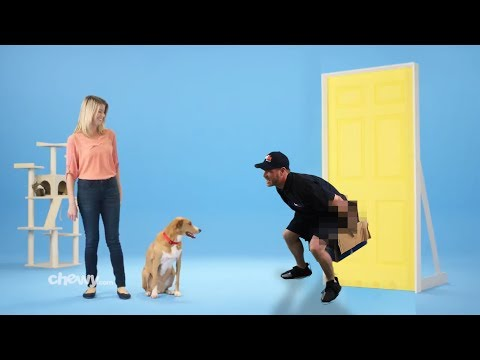 If Commercials were Real Life - Chewy