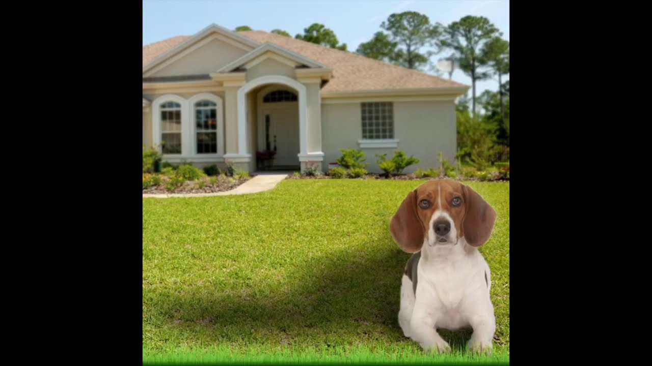 Bailey Answers Your Questions About Selling Your House to Beagle