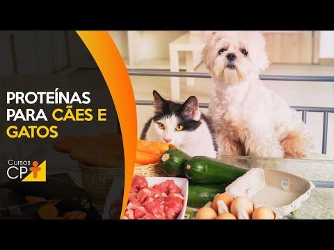 Clique e veja o vídeo Alimentação Natural para Cães e Gatos Proteínas