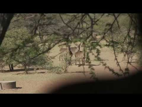 Waterbuck, Select Safaris South Africa