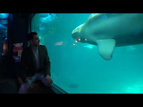 Travel Guide Chicago, USA - Shedd Aquarium, Chicago: Whales, Dolphins, Fish and More