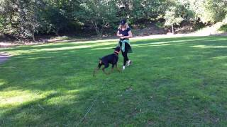 Puppy Training San Jose | Canine Tutors Dog Training 408-455-1503