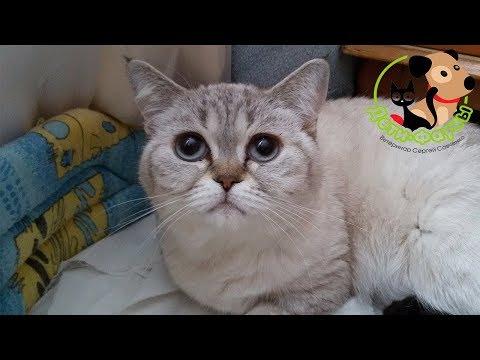 Почему кошки болеют