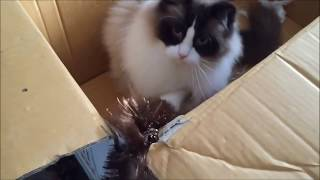 CHRISTMAS CATS. Funny video. Let it snow.