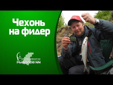 Чехонь на фидер Рыбалка на Волге на пенопласт с опарышем.