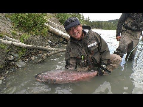 #300 【PART1】アラスカの短い夏に見る白日夢~トラウトアングラーが鮭の王に挑む~