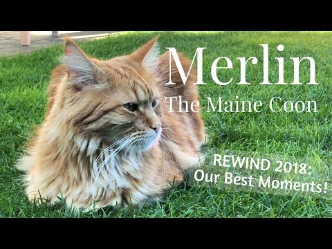 Merlin the Maine Coon - REWIND 2018: OUR BEST MOMENTS!