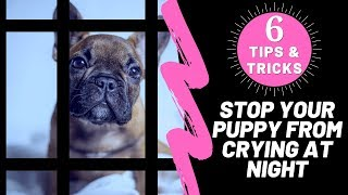 How To Stop Your Puppy From Crying At Night 6 Tips & Tricks